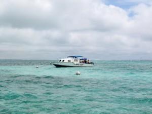 Walhaiausflug Belize