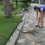 Parque Seminario Guayaquil